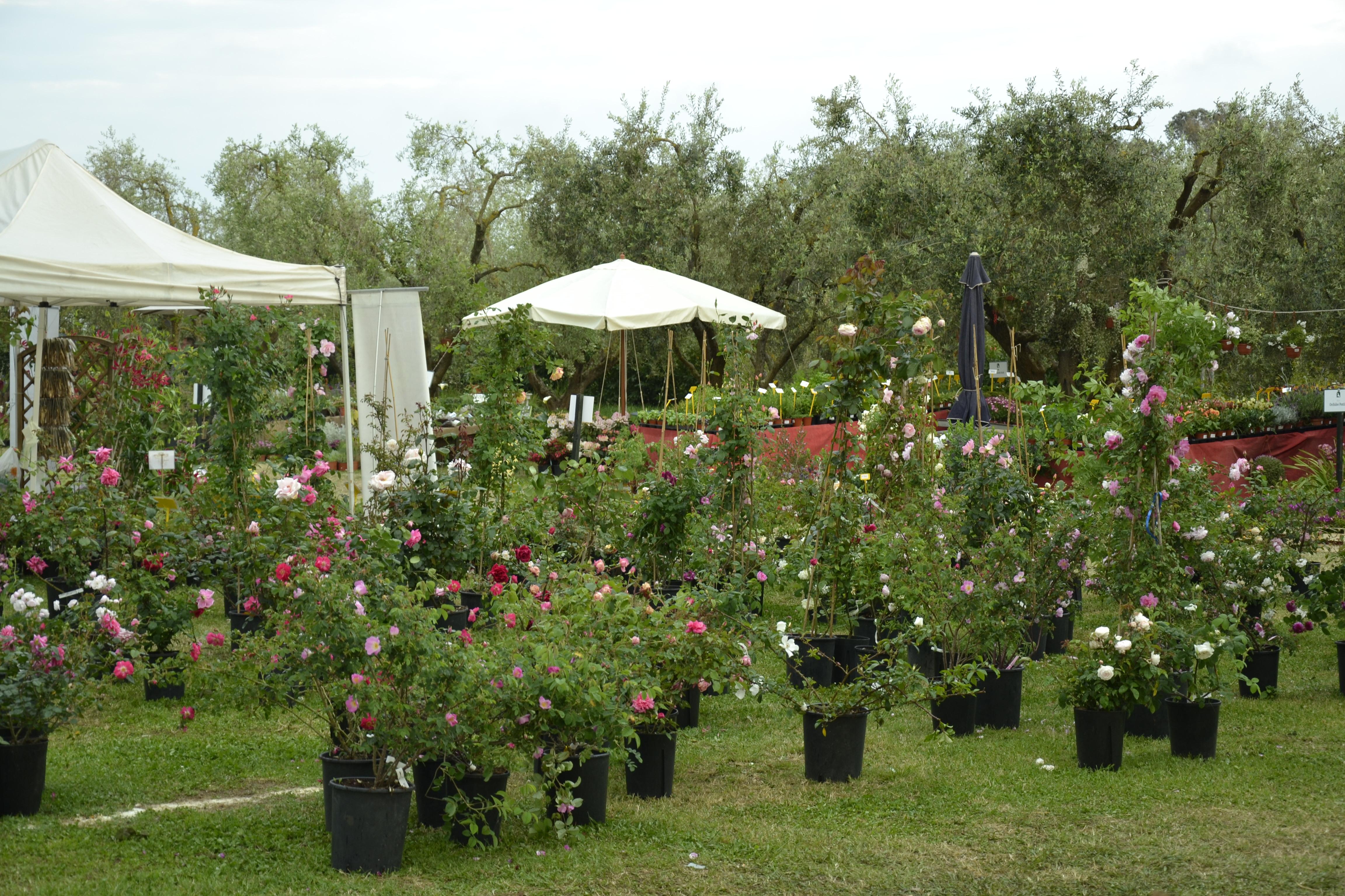 tor san lorenzo « cambiaversoanzio - Giardini E Terrazzi Garden Show Mostra Mercato