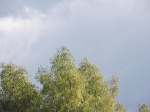 sacida-il-volo-del-falco-ridotto
